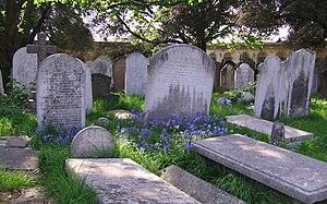 English: Garden Bluebells taken in Brompton ce...