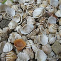 Would You Have a Seashell Driveway?