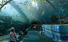 Photo looking upward through 15 feet (4.6 m)-diameter glass tube into a fish-filled aquarium