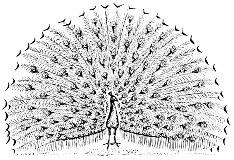 File:Peacock (PSF).png