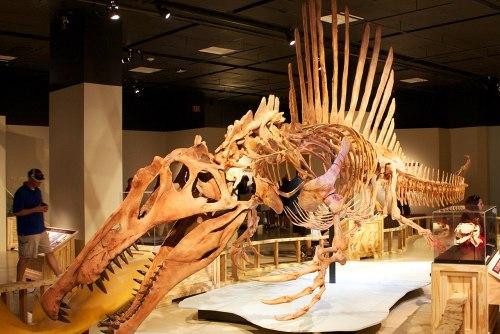 Spinosaurus swimming.jpg
