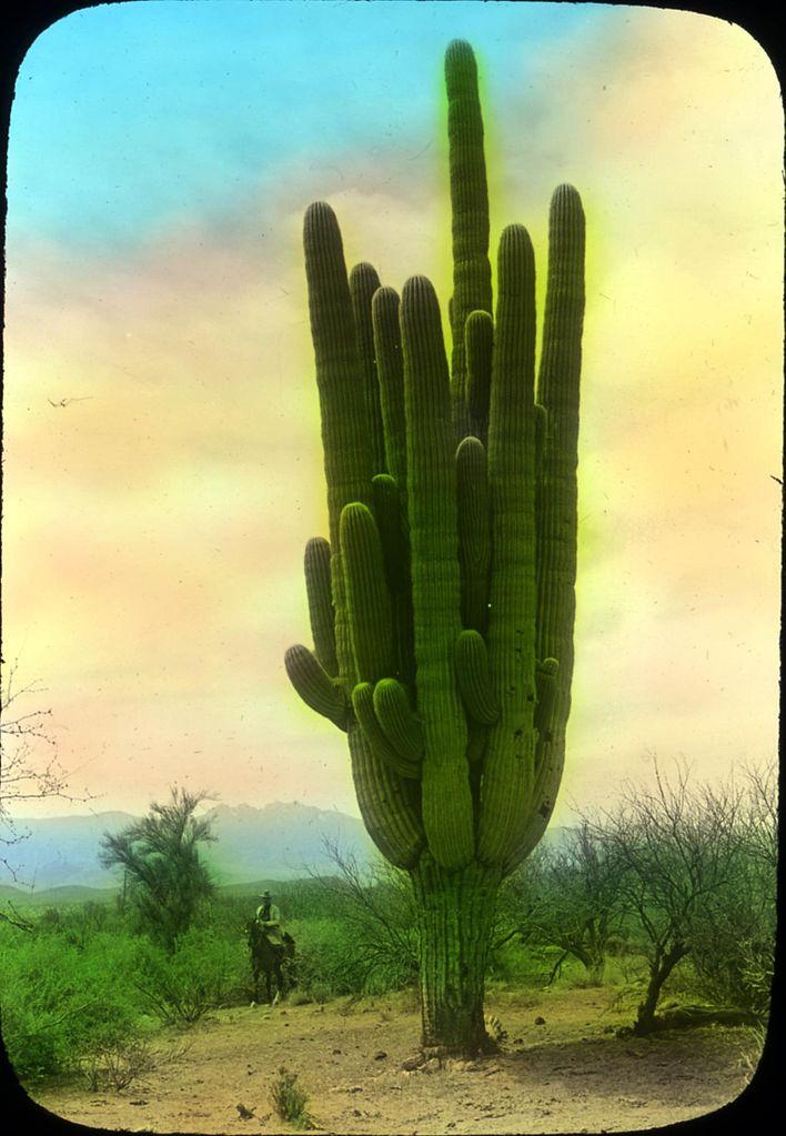 Purchase Cactus Plants Online