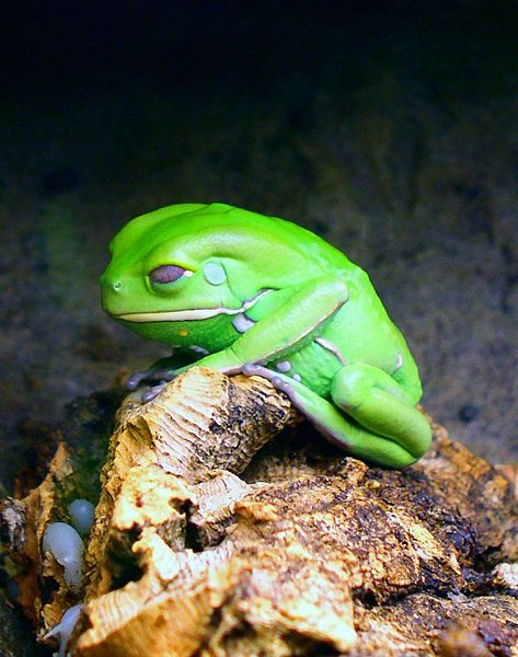 File:Sad frog.jpg