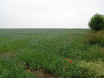 English: Lush Green Fallow Field, Darrington. ...