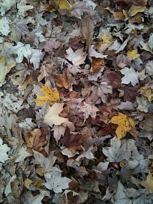 English: A pile of Southern Fall leaves