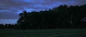 Fireflies in Illinois Français : Des lucioles ...