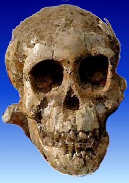 Selam (Australopithecus)