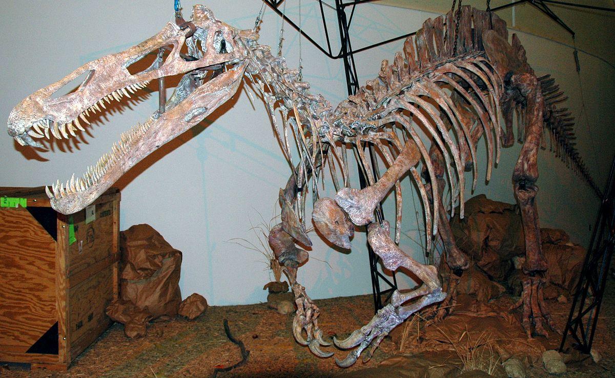 Suchomimus Wikipedia
