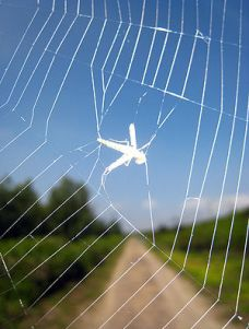 A bug (insect) caught in a spider web. Photogr...