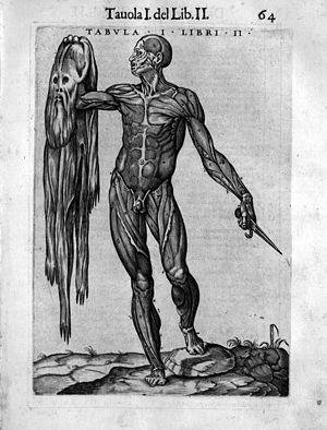 Juan de Valverde (ca. 1525-ca. 1587): La anato...