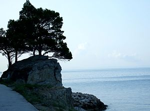 Mediterraneam sea and a rock witch pines.