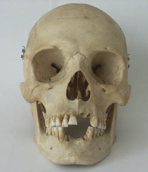 The human skull is a universal symbol for death.