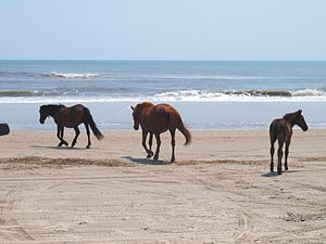 Banker horses