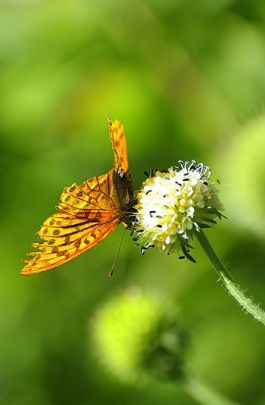 English: A butterfly, in Pome county, Tibet.