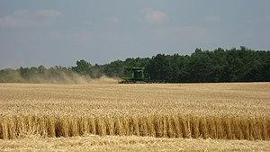 English: A combine harvesting wheat. Photo tak...