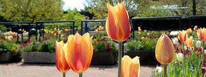 Chicago Botanic Garden Heritage Garden