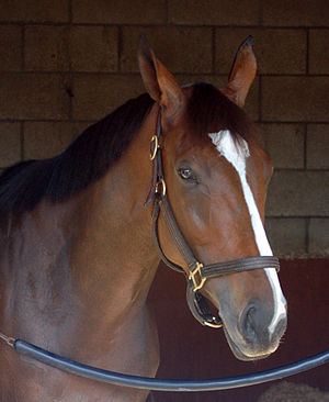 Nashoba's Key in her stall at Del Mar on 08/18/07