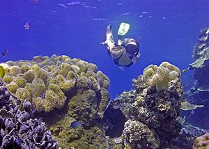 Snorkeling in crystal clear blue waters of the...