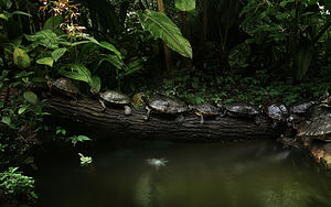 Turtles, Tortoises, and Terrapins are reptiles...