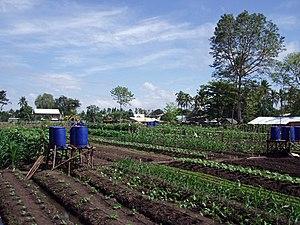 Allotment Garden of Kauswagan, Cagayan de Oro City