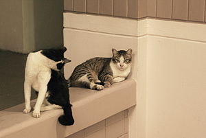 Domestic cats in singapore. A bicolor and a br...