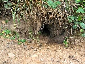 Entrance to a rabbit warren.