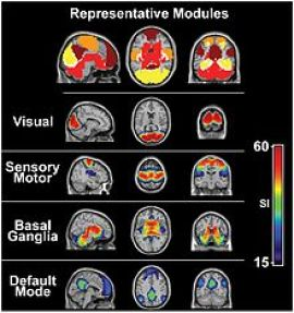 Image result for resting state networks