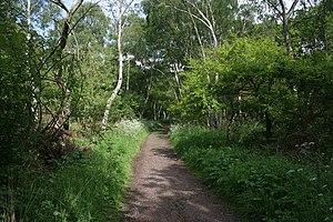 English: The Robin Hood Way, Sherwood Forest T...