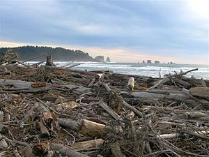 English: Driftwood at First Beach, La Push, Wa...