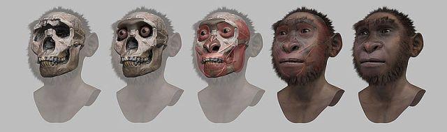 Reconstrucción forense del rostro de un Homo ergaster: el Niño de Turkana (Nariokotome)