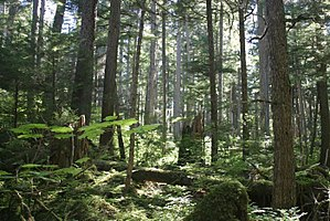 It is no wonder that the great smoky mountains was recognized as a national park, a biosphere reserve, and a world heritage site. Old Growth Forest Wikipedia