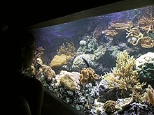 Photo of water, coral, and fish behind a glass wall.