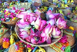 Indian lotus flowers in Madurai
