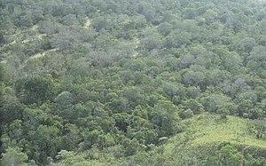 Amazon Rainforest created by משתמש:בן הטבע
