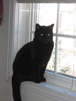 Black cat on window