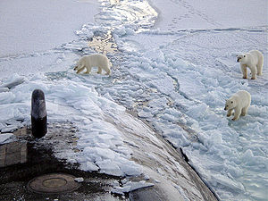 Polar bears on the sea ice of the Arctic Ocean...