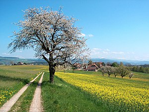 Dirt road in Switzerland for agricultural use.
