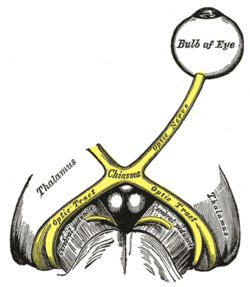 The Optic Nerve