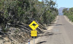 A Kangaroo Crossing in Eastern Australia.