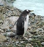 Matt Cutts: Google Penguin 2.1 is Live