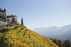 English: Vineyards in Dorf Tirol