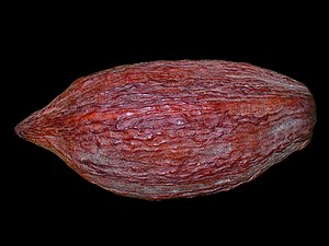 English: Theobroma cacao, Malvaceae, Cocoa Tre...