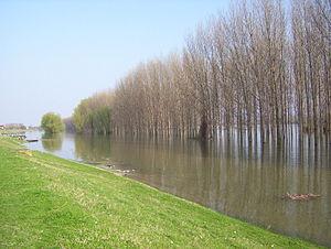 Danube river near Futog