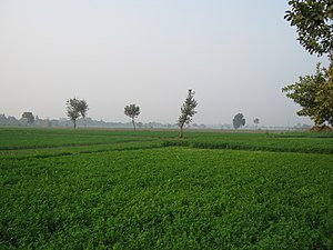 "English: A view of green farms from ""Jat ..."