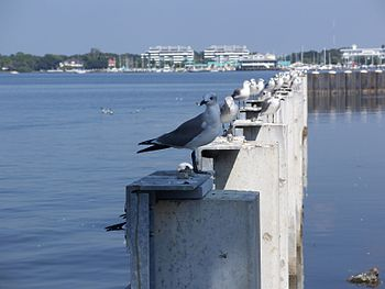 : Birds near water