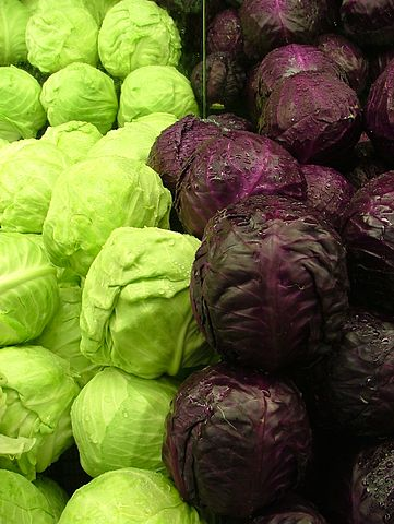https://i1.wp.com/upload.wikimedia.org/wikipedia/commons/thumb/f/fa/Cabbages_Green_and_Purple_2120px.jpg/361px-Cabbages_Green_and_Purple_2120px.jpg