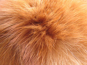 Cat's hair close-up.