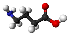 Ball-and-stick model of the gamma-aminobutyric...