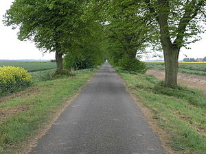 Tunnel of Trees This long straight avenue has ...