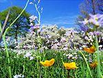 A Primavera Chegou e Vejo flores em Crochet
